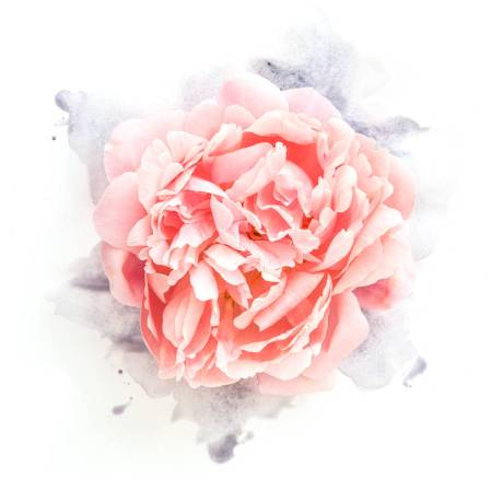 original_peony-flower-with-watercolour-floral-art-print