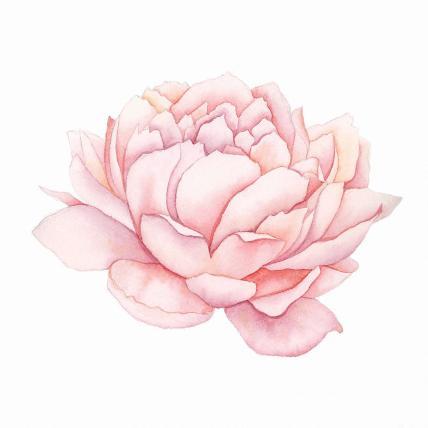 pink-peony-watercolor-taylan-apukovska