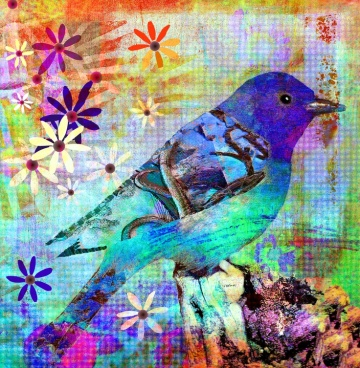 62dc60dc85127b3327a5a4cfbf18ac2b--colorful-birds-mead.jpg