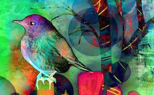 831249e402f61b750a95951a5bfdecaa-colorful-birds-mead-e1503468372172.jpg
